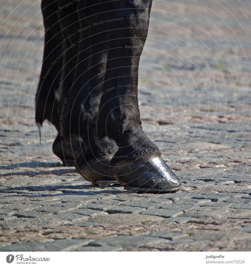 horses Horse Hoof Horseshoe Pelt Glittering Cobblestones Black Animal Mammal Odd-toed ungulate Feet Shadow Stone Paving stone Black horse