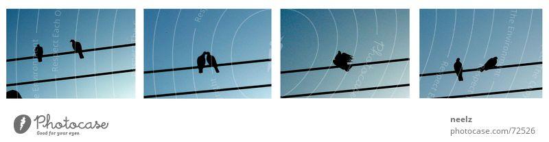 Sky Above Tall Speed Pure Make Upward Pigeon Animal Scaffold Rod Sky blue Rutting season