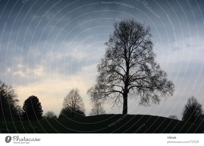 no leaves Tree Treetop Hill Autumn Twilight Dim Evening Calm Pensive To be silent Break Stop short Relaxation Switch off Serene Moody Dark Enchanting Black