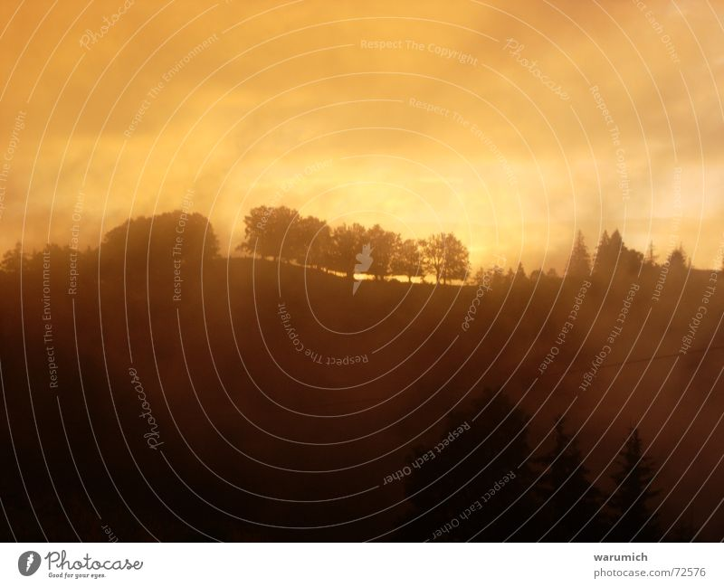 Sky Tree Clouds Forest Orange Fog Blaze Exceptional Dusk Fairy tale Jinxed