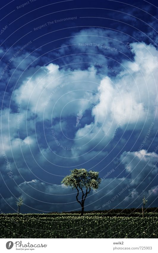 Sky Nature Plant Blue Tree Loneliness Landscape Clouds Environment Blossom Spring Meadow Grass Horizon Weather Growth