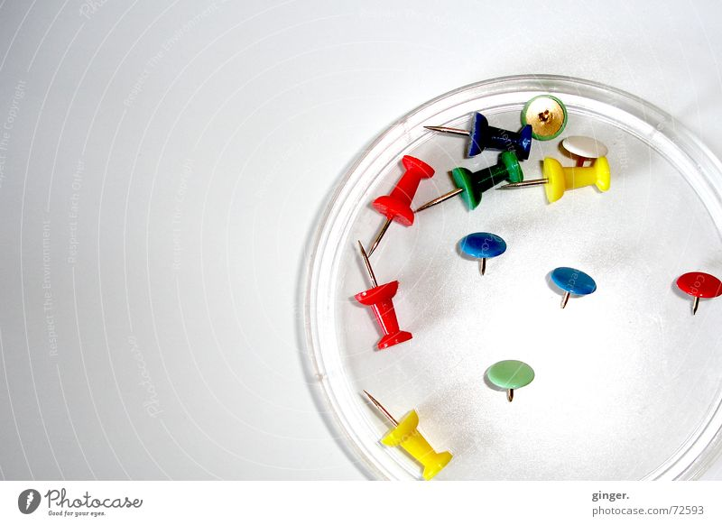 """Petri dish"" with pins (1) Bowl Bright Colour Petri bowle Lie Multiple Copy Space left Blur Deserted Pin Difference drawing pins Point Round Light Stationery"