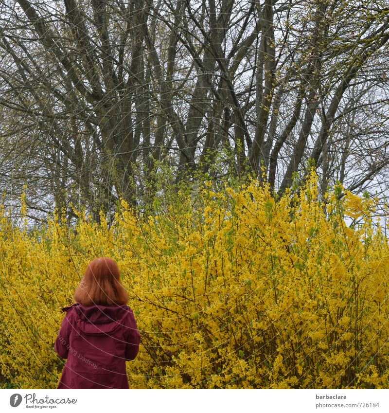 AST 7 | lady in red Feminine Woman Adults 1 Human being Nature Landscape Plant Spring Tree Bushes Park Coat Red-haired Looking Stand Fresh Many Wild Yellow