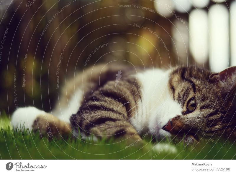 Cat Nature Beautiful Relaxation Animal Meadow Garden Lie Dream To enjoy Pet Rotate Smooth Breathe Cozy Peaceful