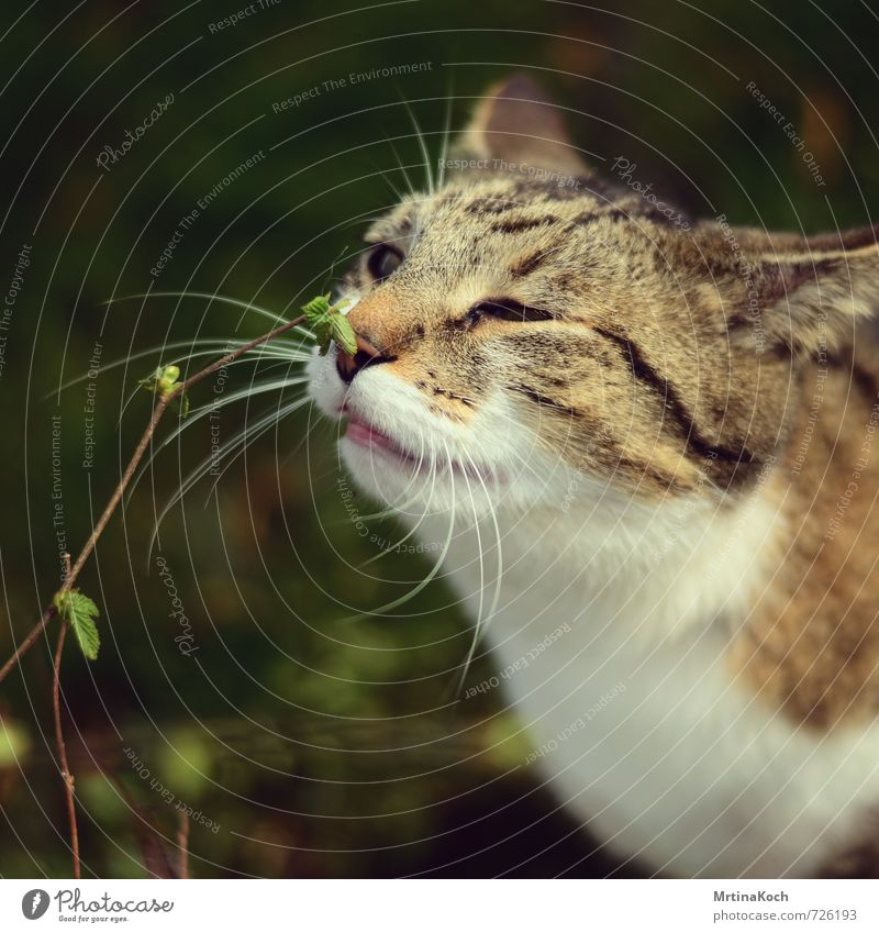 I smell spring. Nature Plant Animal Pet Cat 1 Joy Happy Optimism Trust Love of animals Attentive Watchfulness Patient Calm Curiosity Interest Domestic cat