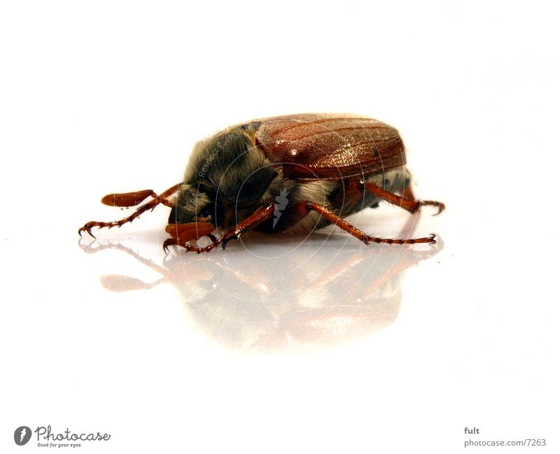 Nature White Eyes Animal Hair and hairstyles Legs Brown Transport Floor covering Wild animal Wing Under Beetle Organic produce Feeler Prongs