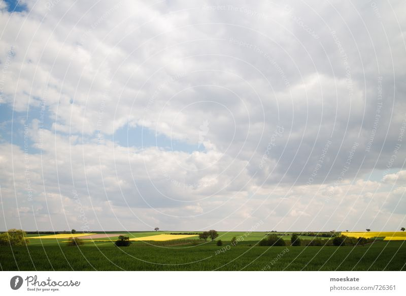 Rape fields in spring Clouds Yellow Green Canola Canola field Meadow Tree Spring Colour photo Multicoloured Exterior shot Deserted Copy Space top Day