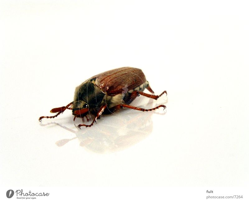 Nature White Eyes Animal Hair and hairstyles Legs Brown Floor covering Wild animal Wing Under Beetle Organic produce Insect Feeler Prongs