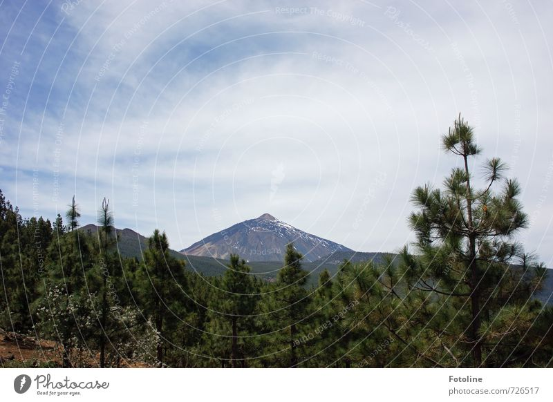 Teide - Tenerife Environment Nature Landscape Plant Sky Clouds Sunlight Summer Beautiful weather Tree Rock Mountain Volcano Bright Blue Green White Pine