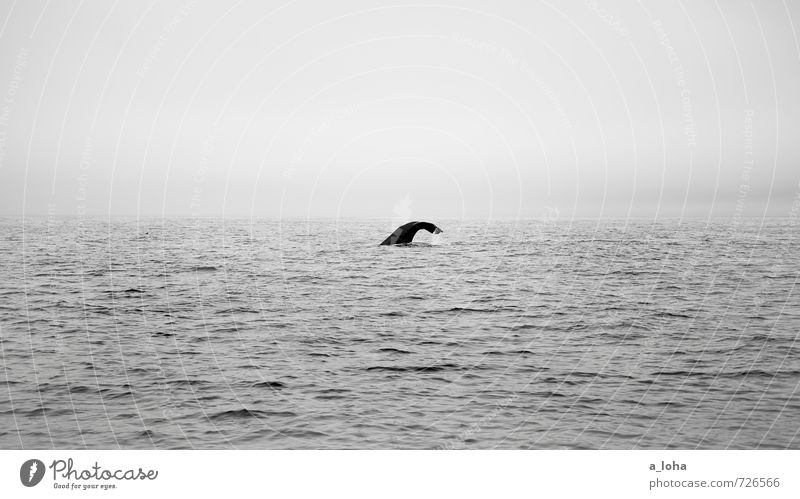 down deep Nature Animal Elements Water Drops of water Sky Horizon Waves Ocean Wild animal Whale Sperm whale 1 Calm Wanderlust Pure Far-off places New Zealand