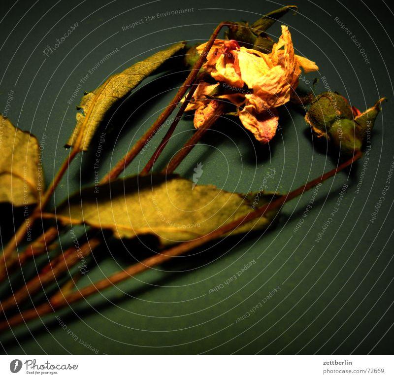 Flower from Hamburg Blossom Leaf Herbarium Rod Stalk Tea Vacation & Travel