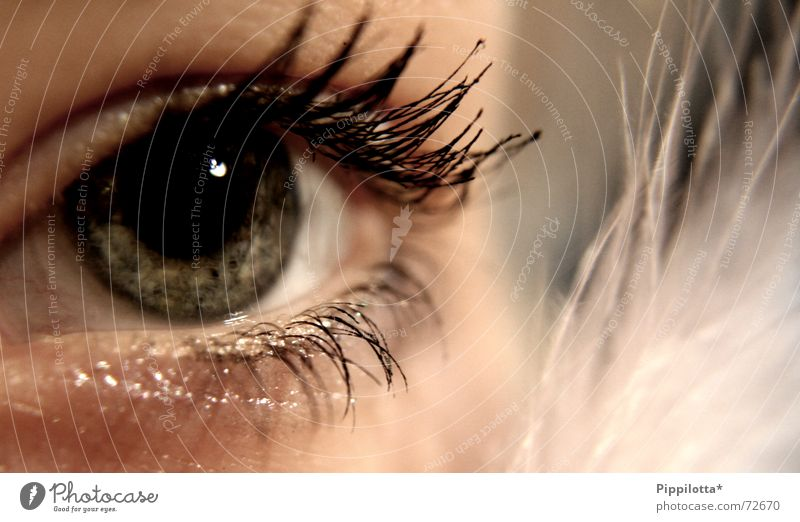 Human being Beautiful Face Eyes Cold Brown Glittering Perspective Vantage point Soft Feather Observe Clarity Delicate Discover Make-up
