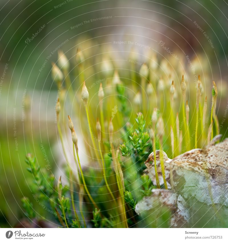 Coffee trip into the greenery Nature Plant Spring Moss Forest Growth Thin Small Green Spring fever Serene Patient Calm Attachment Colour photo Exterior shot