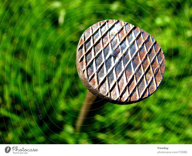 ::: Ladybird landing place ::: Carpenter Roofer Length Tee off Work and employment Bounty Joiner Stapler Under Beat Nail Green Pattern Round Craftsperson