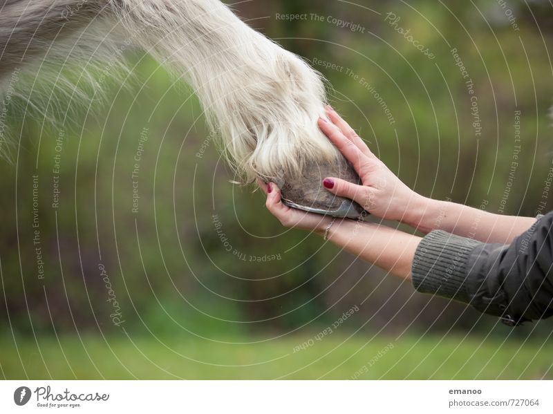 Give me hips! Joy Contentment Relaxation Equestrian sports Ride Human being Young woman Youth (Young adults) Woman Adults Hand Fingers 1 Nature Animal