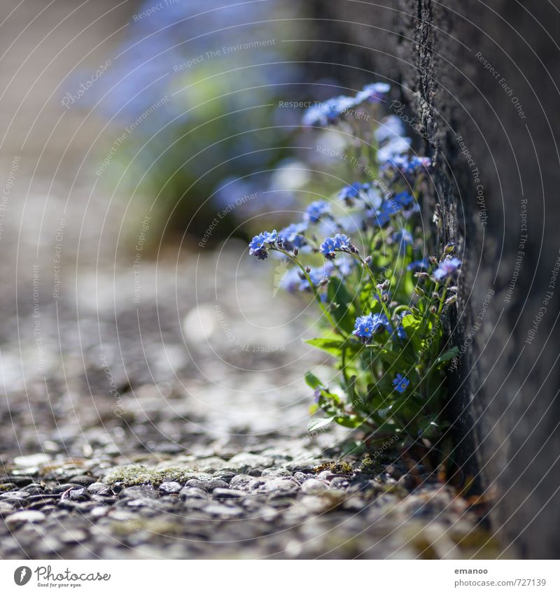 Nature Blue Beautiful Green Plant Summer Flower Wall (building) Life Spring Wall (barrier) Blossom Gray Stone Garden Park