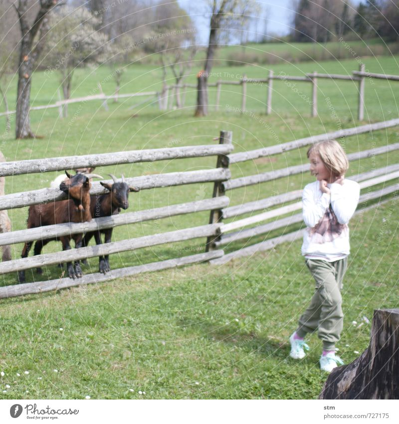 adventure farm Playing Vacation & Travel Trip Adventure Summer Living or residing Garden Human being Feminine Child Girl Infancy Life 1 3 - 8 years 8 - 13 years