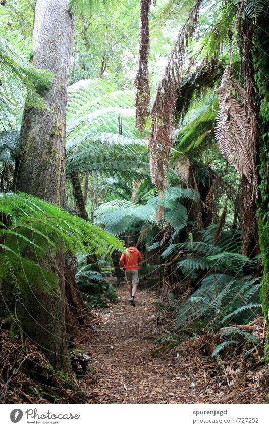 bush walk Hiking Nature Plant Earth Tree Forest Virgin forest Wood Movement Walking Green Self-confident Resolve Ease Independence Colour photo Exterior shot