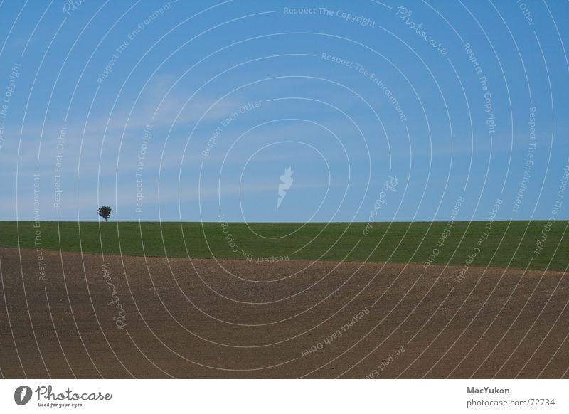 Sky Tree Far-off places Colour Meadow Landscape Field Horizon 3