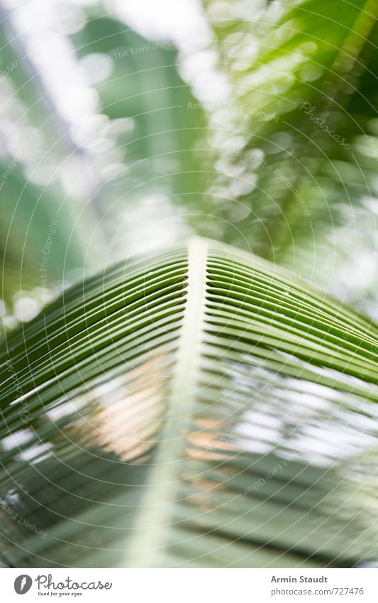 Nature Vacation & Travel Green Plant Summer Tree Leaf Environment Natural Moody Background picture Lifestyle Design Idyll Authentic Perspective