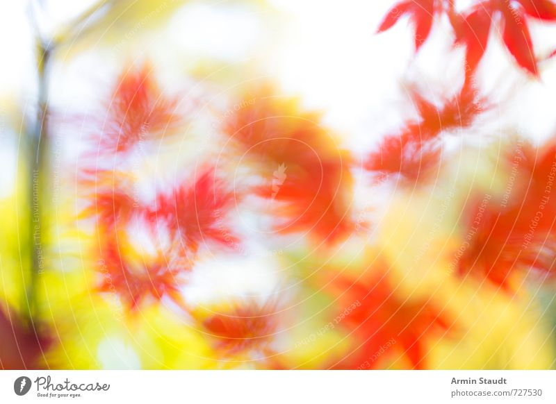 Background with blurred autumn leaves Nature Animal Autumn Beautiful weather Wind Plant Tree Leaf Park Glittering Illuminate Faded Esthetic Yellow Red Moody