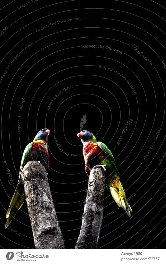 Bird V Parrots Beak Feather Virgin forest Branch atreyu Tree trunk Flying