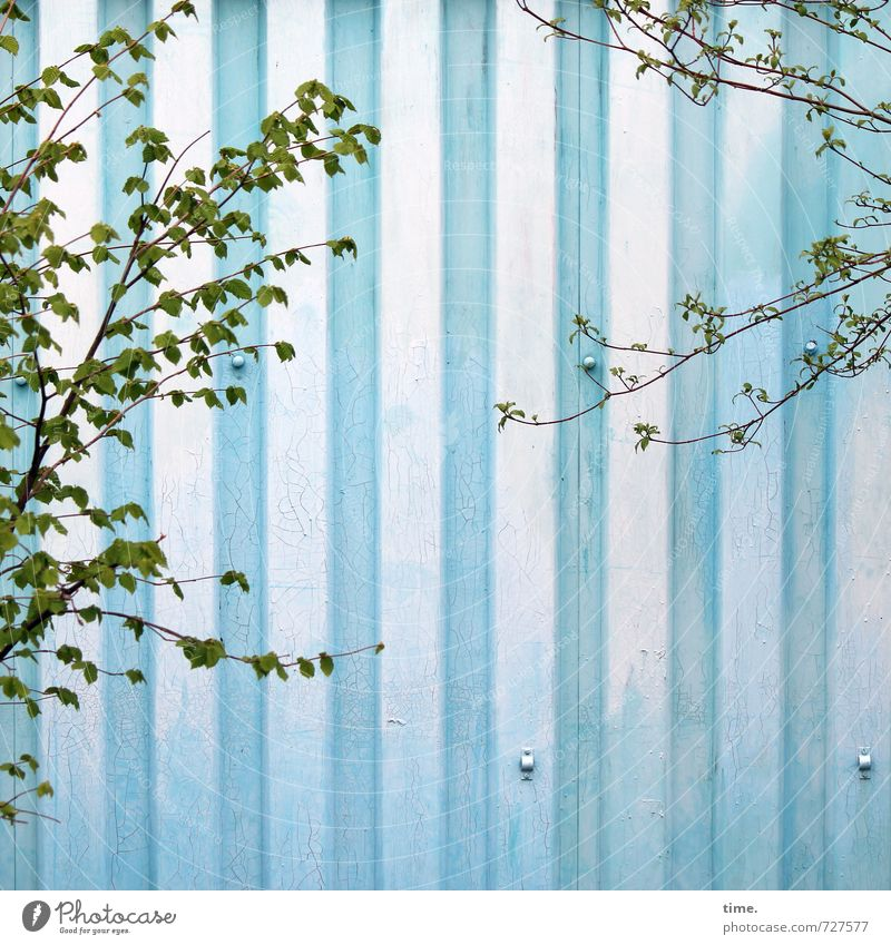 greenwashing Spring Tree Foliage plant Wall (barrier) Wall (building) Tin Growth Blue Green Movement Relationship Design Discover Serene Contentment Ease