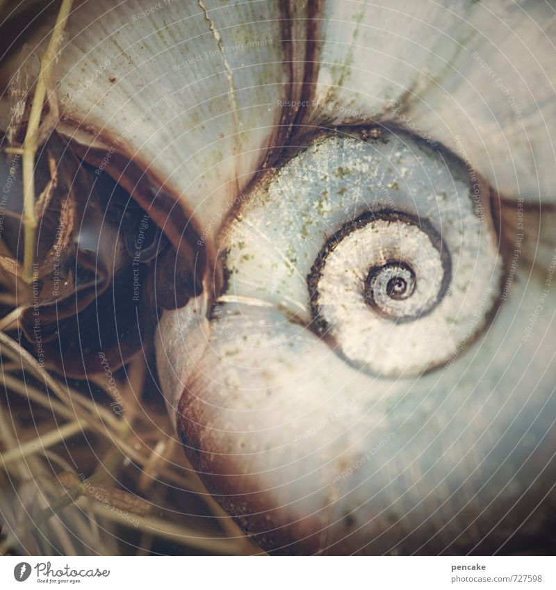 hypnosis Nature Elements Water Spring Pond Animal Snail 1 Sign Esthetic Exceptional Beautiful Uniqueness Snail shell Sea snails Spiral Universe Photomicrograph