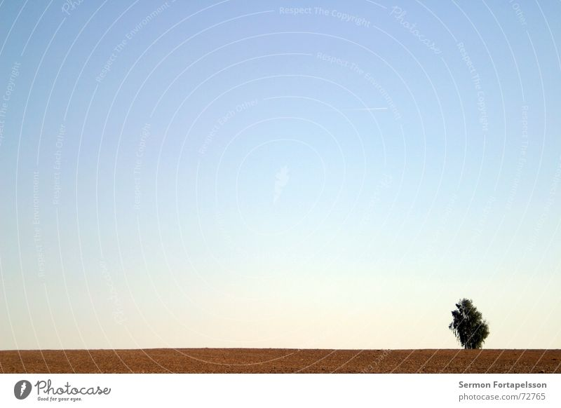 Sky Tree Summer Loneliness Clouds Meadow Sadness Horizon Wind Field Individual Branch Agriculture Skyline Americas Flat