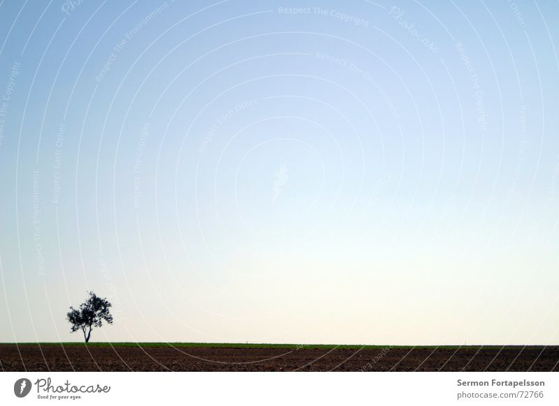 O---| Tree Clouds Field Summer Afternoon Saturday Loneliness Agriculture Meadow Flat Individual Horizon Sky Wind Silhouette Skyline Americas Branch Province