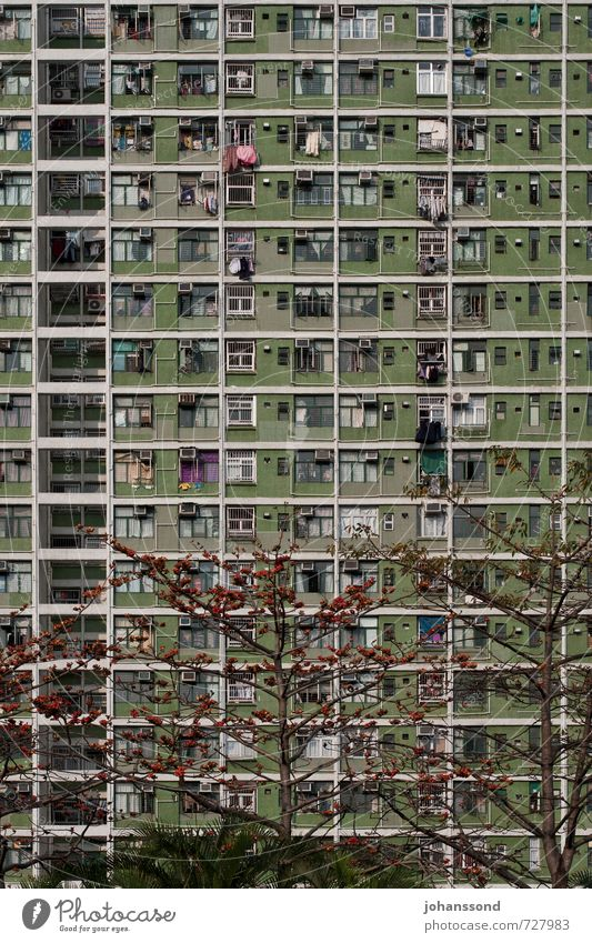 City Green Tree Loneliness House (Residential Structure) Window Together Facade Living or residing Gloomy High-rise Growth Threat Simple Change Claustrophobia