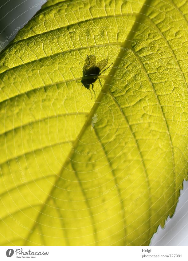 I see you... Environment Nature Plant Leaf Chestnut leaf Rachis Animal Fly 1 Illuminate Stand Growth Exceptional Small Natural Above Green Black Contentment