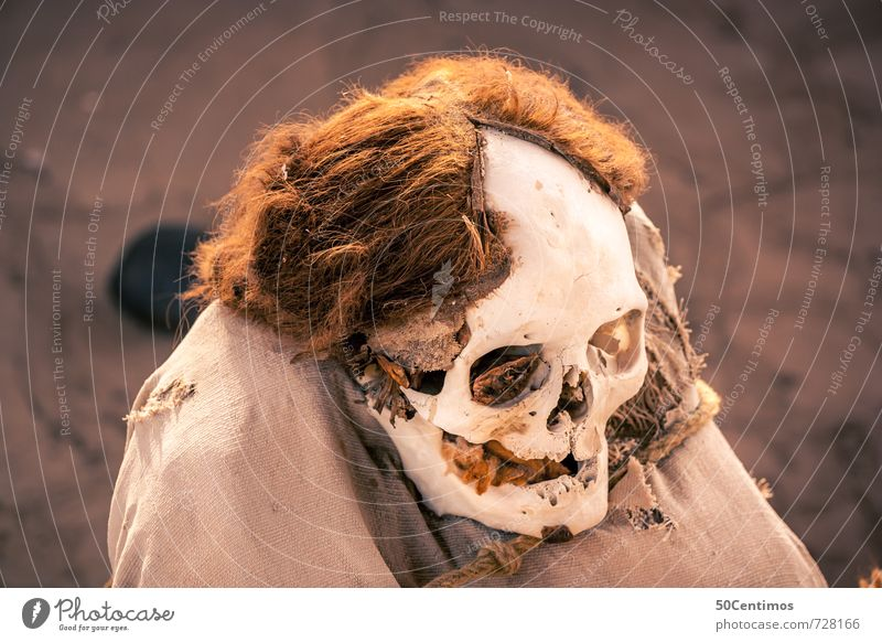 The Skull Head Skeleton 60 years and older Senior citizen Hair and hairstyles Brunette Blonde Long-haired Old Time Future Colour photo Exterior shot Downward
