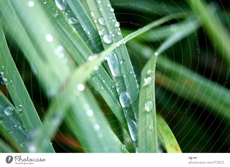 Nature Water Green Grass Drops of water Wet Rope Earth Damp Blade of grass Grass green
