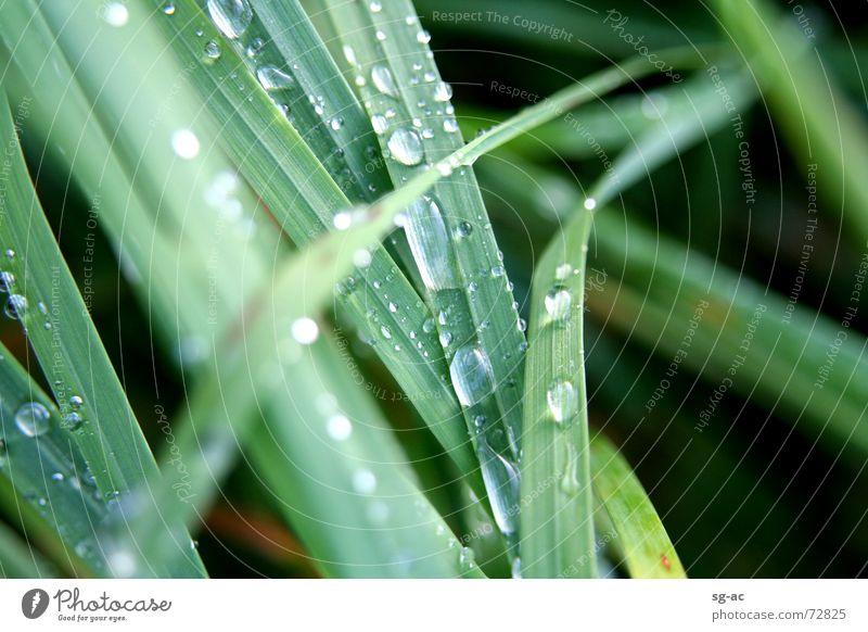 Nature Water Green Grass Drops of water Wet Rope Earth Damp Blade of grass Grass green