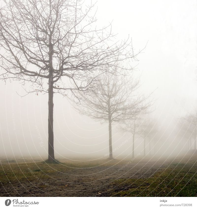 misty way to nowhere Environment Nature Landscape Sky Spring Autumn Winter Climate Bad weather Fog Tree Park Avenue Footpath Deserted Lanes & trails Stand Dark