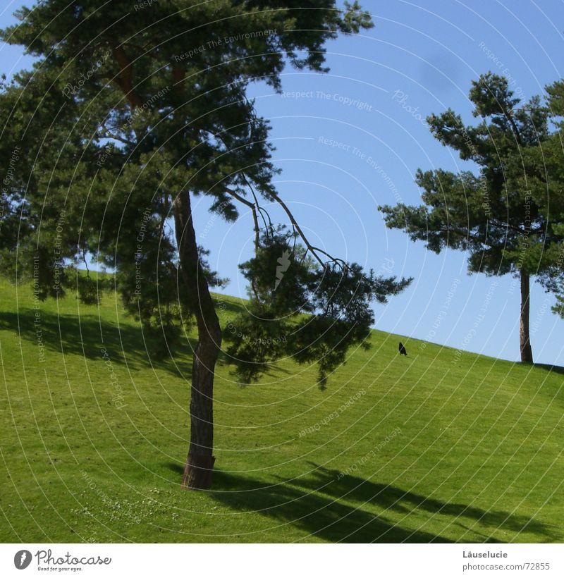 Tree Green Blue Summer Meadow Bird Lawn Light blue Wolfsburg