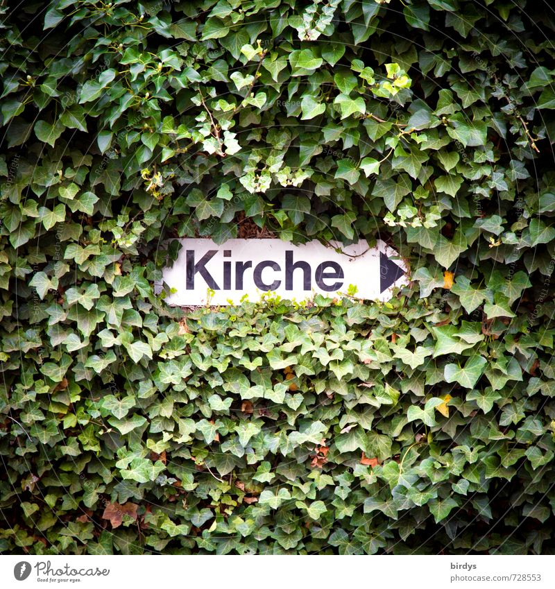 church Ivy Characters Signs and labeling Exceptional Positive Green Black White Protection Life Hope Religion and faith Might Nature Growth Lanes & trails