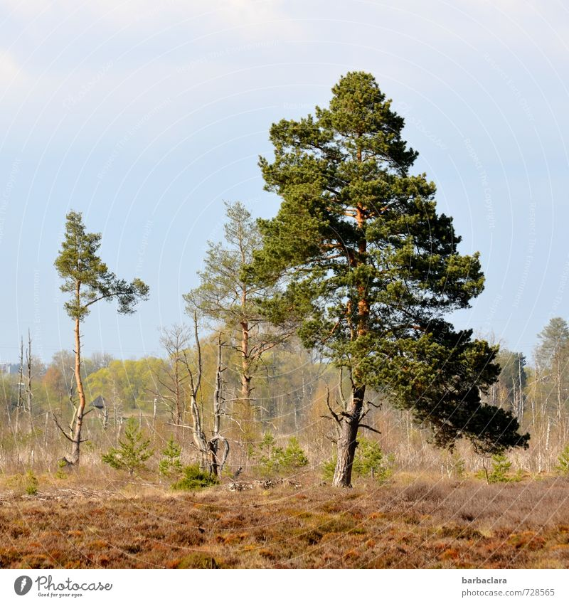 Sky Nature Plant Tree Calm Landscape Far-off places Forest Environment Earth Growth Power Bushes Stand Climate Moss