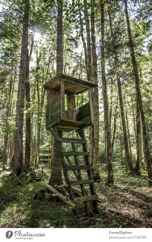 hunter Nature Forest Hunting Hunter Protect Calm Tree Green Brown Ladder Wood Woodground Hunting Blind Observe Wild animal Colour photo Exterior shot Deserted