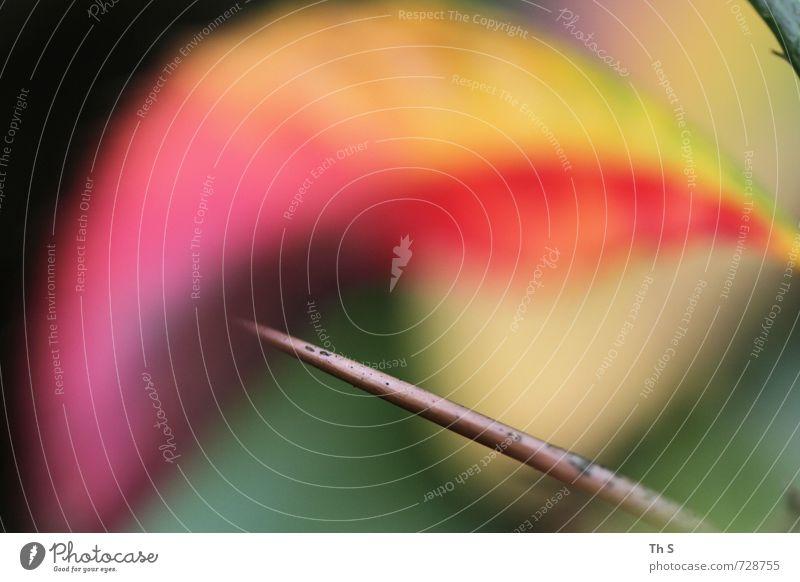 Nature Beautiful Colour Plant Summer Life Spring Style Natural Dream Elegant Design Wild Crazy Esthetic Happiness