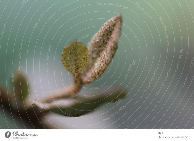 Nature Plant Calm Leaf Environment Natural Elegant Design Contentment Authentic Esthetic Blossoming Uniqueness Serene Harmonious Patient