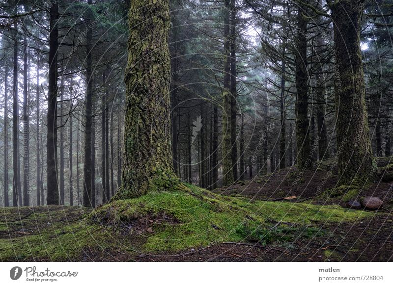 down-to-earth Landscape Plant Climate Weather Bad weather Fog Tree Grass Moss Forest Hill Mountain Gray Green Colour photo Exterior shot Deserted Day