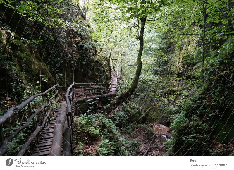 Into the forest ... Hiking Nature Landscape Plant Earth Beautiful weather Tree Bushes Moss Fern Wild plant Forest Virgin forest Canyon Rocky gorge