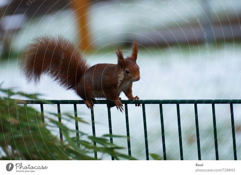 Green White Animal Forest Brown Garden Park Elegant Wild animal Observe Cute Adventure Climbing Fence Squirrel Rodent
