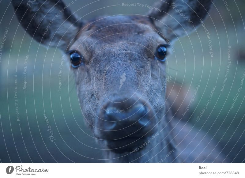 Green Black Autumn Happy Gray Brown Free Authentic Observe Curiosity Near Watchfulness Interest Feeding Timidity Deer