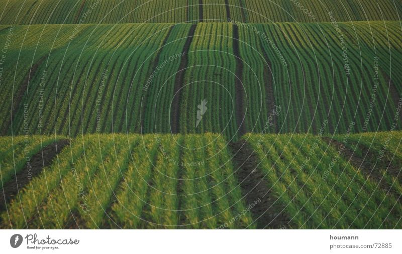 Green Landscape Field Waves Stripe