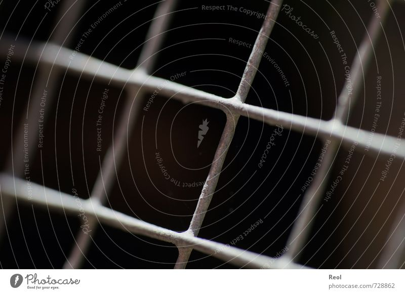 captive Pet Grating Mesh grid Fence Enclosure Barn lattice bars Penitentiary Metal Steel Bizarre Adversity Captured Enclosed Fenced in imprisoned Colour photo