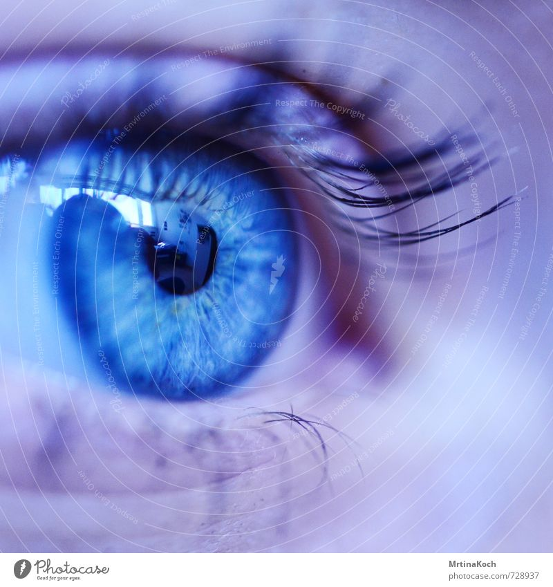 my eyes to see. Human being Feminine Adults Eyes 1 18 - 30 years Youth (Young adults) Authentic Far-off places Bright Natural Beautiful Eroticism Blue Pupil