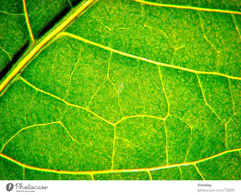 ::: Juicy green 2 ::: Background picture Tree Romance Multicoloured Near Light Photosynthesis Mature Green Leaf Deities Plant Bright green Vessel Lower Saxony
